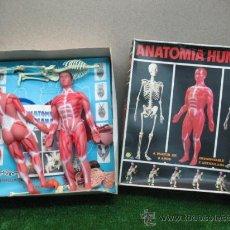 Juegos educativos: (SERIMA) JUEGO DE ANATOMIA HUMANA. Lote 22277429