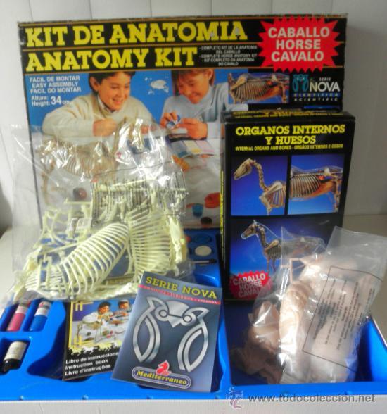 juego kit de anatomia caballo * mediterraneo * - Comprar Juegos ...