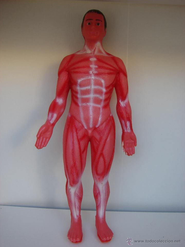 anatomia humana. con el esqueleto completo dent - Comprar Juegos ...