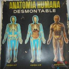 Juegos educativos: JUEGO EDUCATIVO ANATOMIA HUMANA DESMONTABLE (INDUSTRIAS TERMOPLASTICAS SERIMA). Lote 39665882