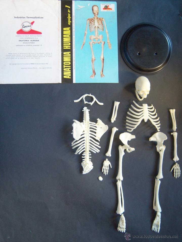 anatomía humana. equipo nº 1. serima. años 60. - Comprar Juegos ...