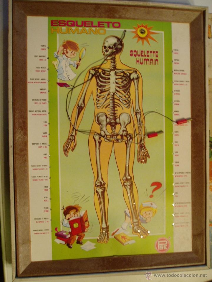 juego enciclopedia electrica esqueleto humano p - Comprar Juegos ...