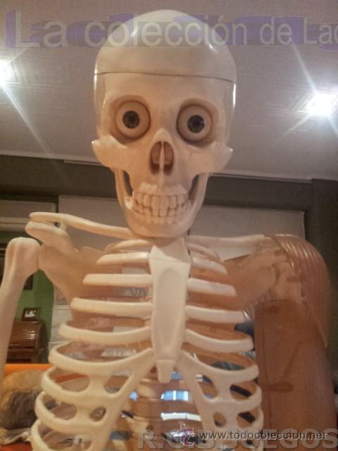 esqueleto humano de plastico para estudio de an - Comprar Juegos ...