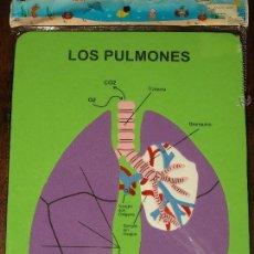 Juegos educativos: PUZZLE EVA. LOS PULMONES. 28,2 X 22,2 CM. SIN USAR. VER FOTOS.. Lote 41497300