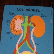 Juegos educativos: PUZZLE EVA. LOS RIÑONES. 28 X 22,2 CM. VER FOTOS.. Lote 41497309