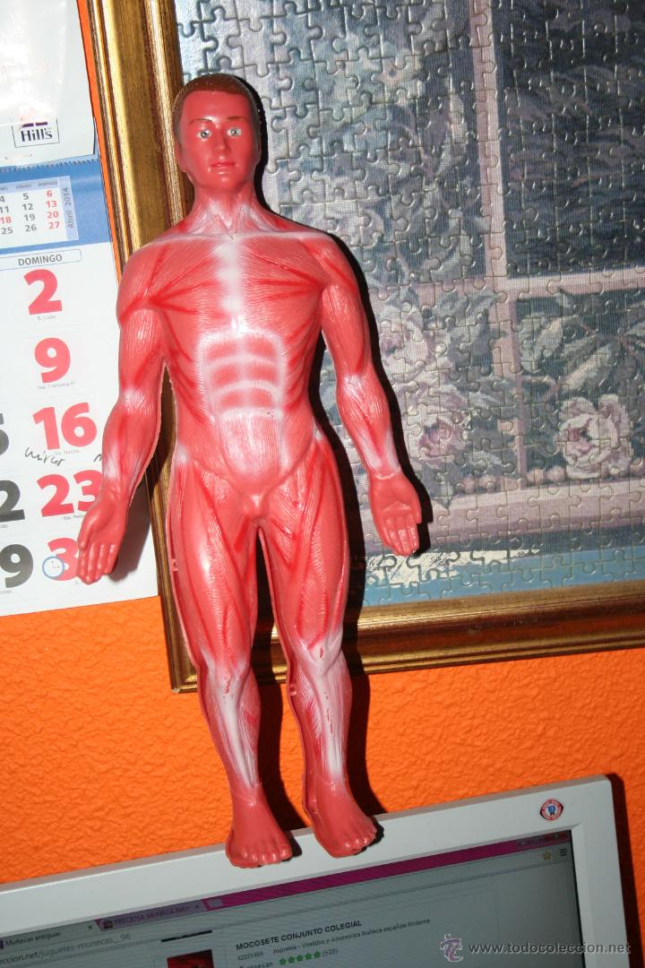 Lujoso Juegos De Aprendizaje De Anatomía Humana Embellecimiento ...