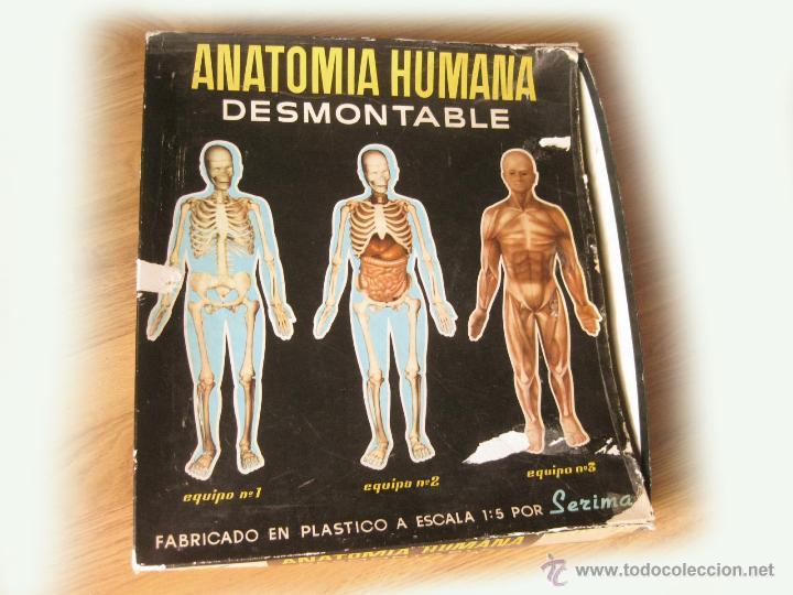 primer modelo de caja de tres equipos de anatom - Comprar Juegos ...