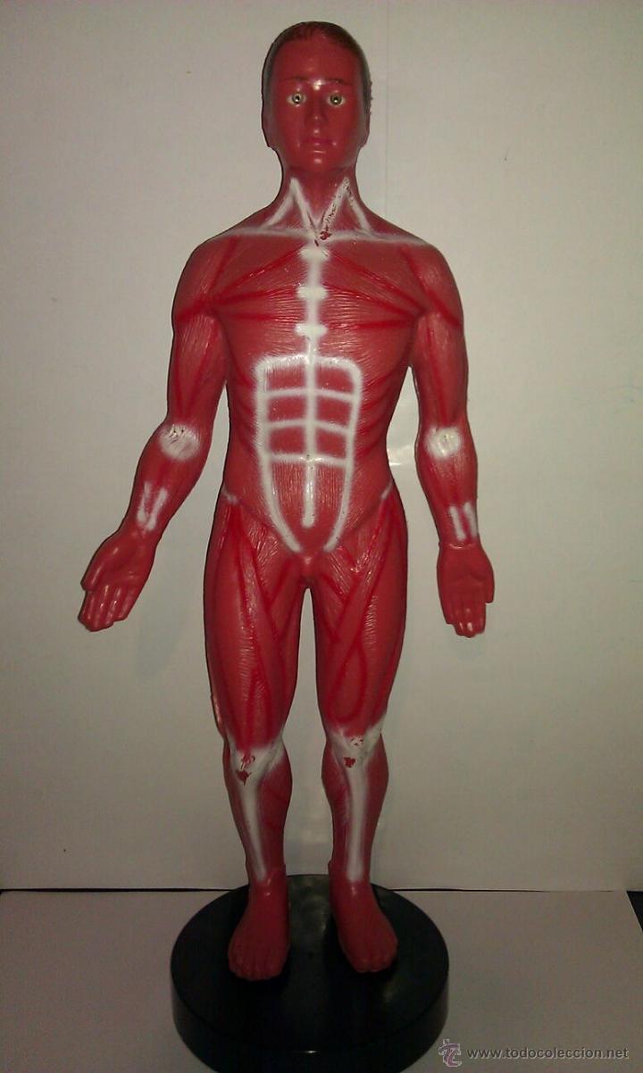 antigua maqueta de anatomía de la serie de dibu - Comprar Juegos ...