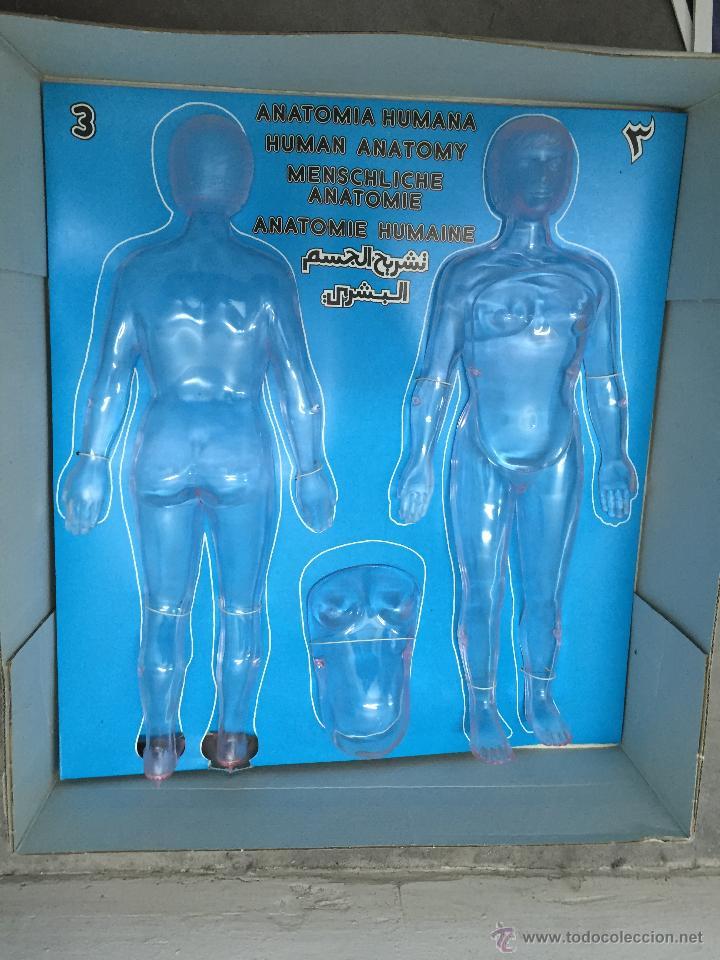 anatomia humana.serima. la mujer y el embarazo - Comprar Juegos ...