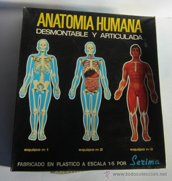 anatomia humana desmontable y articulada, de la - Comprar Juegos ...