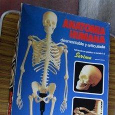 Juegos educativos: JUEGO DE ANATOMÍA HUMANA DESMONTABLE Y ARTICULADA 1963. Lote 53438436