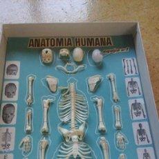 Juegos educativos: DESMONTABLE ANATOMIA DEL CUERPO HUMANO. Lote 50859895