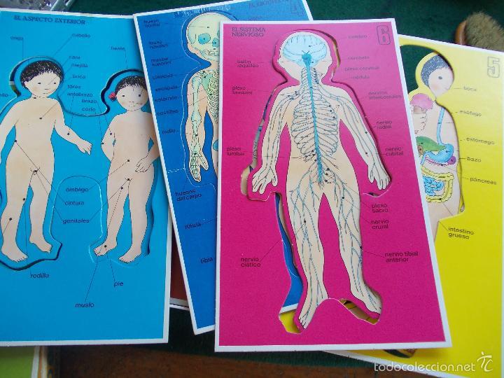 Juegos educativos: Juego de los 80 como es mi cuerpo - Foto 2 - 57501055
