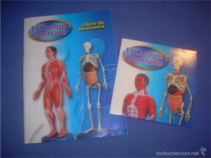 el cuerpo humano. exterior del cuerpo, libro de - Comprar Juegos ...