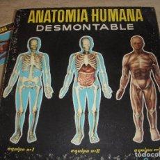 Juegos educativos: ANATOMIA HUMANA DESMONTABLE . EQUIPO COMPLETO. Lote 61431963