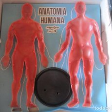 Juegos educativos: JUEGO EDUCATIVO ANATOMIA HUMANA DESMONTABLE (INDUSTRIAS TERMOPLASTICAS SERIMA) . Lote 68362665