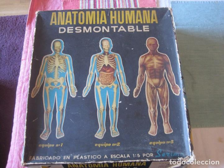 Juegos educativos: JUEGO EDUCATIVO ANATOMIA HUMANA DESMONTABLE (INDUSTRIAS TERMOPLASTICAS SERIMA) - Foto 5 - 68362665