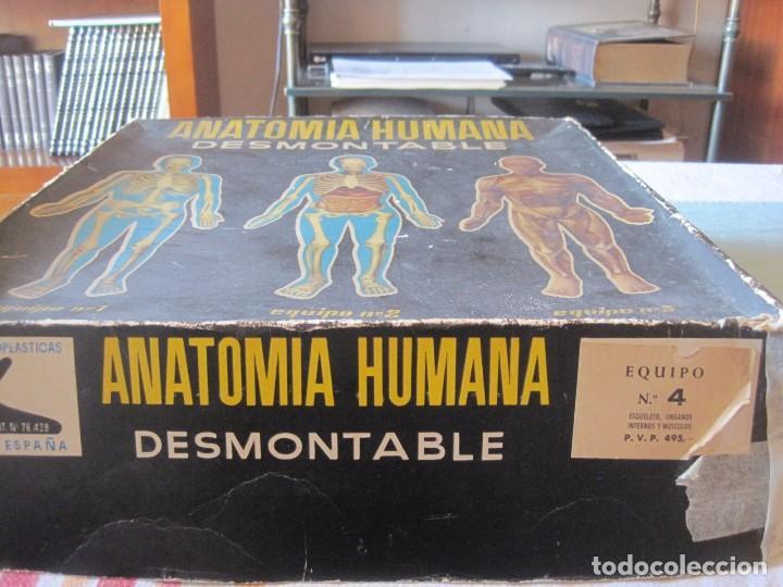 Juegos educativos: JUEGO EDUCATIVO ANATOMIA HUMANA DESMONTABLE (INDUSTRIAS TERMOPLASTICAS SERIMA) - Foto 6 - 68362665