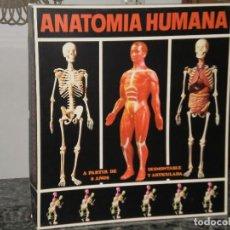 Juegos educativos: ANATOMIA HUMANA , SERIMA ( ESPAÑA ) CAJA ORIGINAL DE LOS AÑOS 70 . EQUIPO Nº 3. Lote 68605549