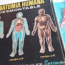 Juegos educativos: ANATOMIA HUMANA DESMONTABLE. Lote 76159791