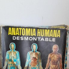 Juegos educativos: ANATOMIA HUMANA DESMONTABLE DE SERIMA.1963. Lote 147482354