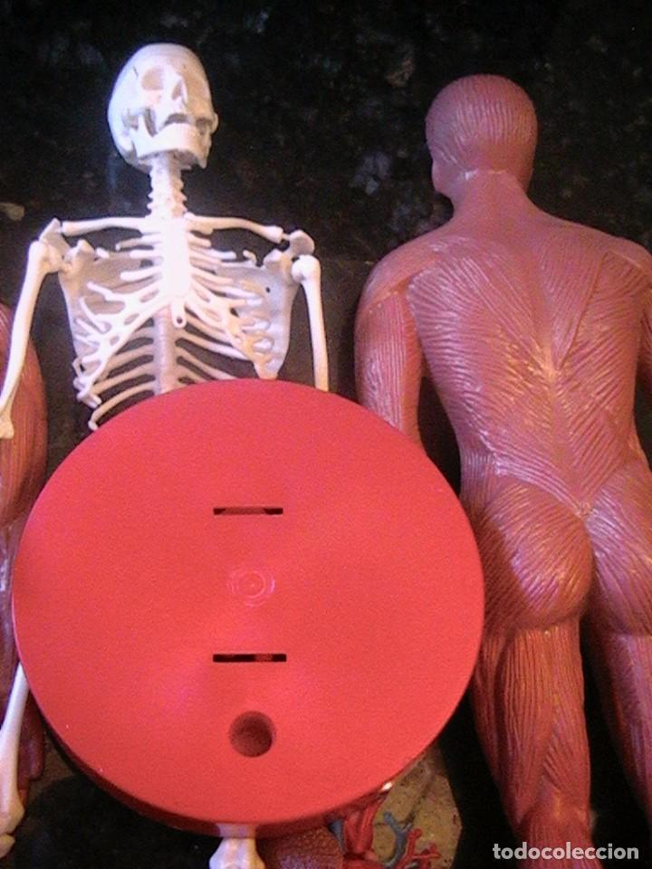 muñeco maniquí serima anatomía humana - Comprar Juegos educativos ...