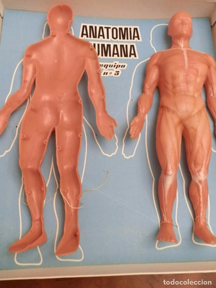 anatomia humana desmontable, 1-2-3. año 1963-64 - Comprar Juegos ...