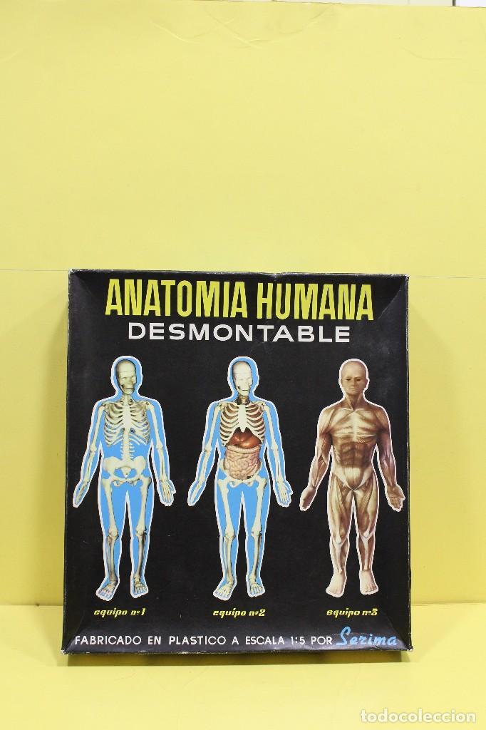 Bonito Anatomía Y Fisiología Juegos En Línea Foto - Imágenes de ...