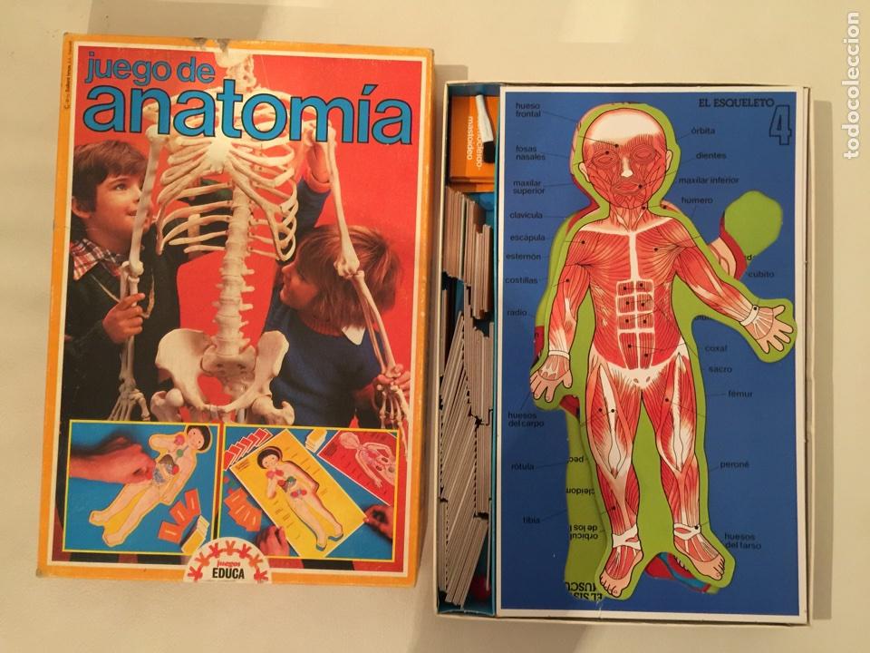 juego de mesa de anatomia de juegos educa - Comprar Juegos ...