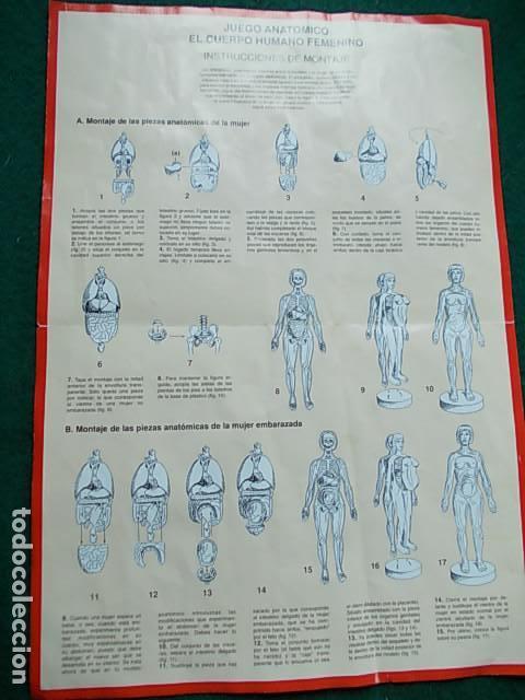 Juegos educativos: Juego anatómico del hombre y la mujer - Foto 3 - 115570499