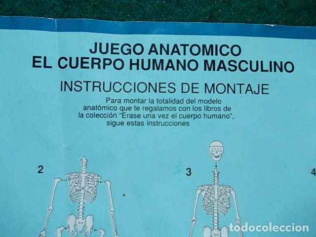 Juegos educativos: Juego anatómico del hombre y la mujer - Foto 5 - 115570499