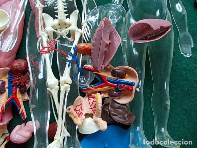 Juegos educativos: Juego anatómico del hombre y la mujer - Foto 6 - 115570499