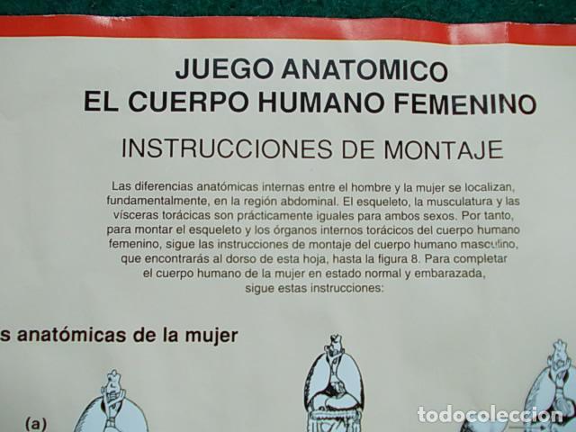 Juegos educativos: Juego anatómico del hombre y la mujer - Foto 7 - 115570499