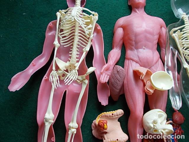 Juegos educativos: Juego anatómico del hombre y la mujer - Foto 9 - 115570499