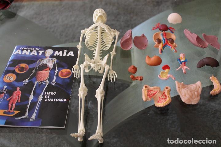 Asombroso Anatomía Y Fisiología Juegos Interactivos Colección ...