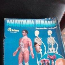 Juegos educativos: ANATOMIA HUMANA SERIMA BADALONA. Lote 127851923