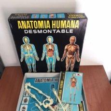 Juegos educativos: LOTE DE JUEGOS ANATOMIA HUMANA DESMONTABLE DE SERIMA. DE LOS AÑOS 70.. Lote 131662837