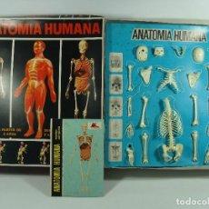Juegos educativos: ANATOMÍA HUMANA - FABRICADO EN ESPAÑA POR SERIMA EN 1963 - COMPLETO Y NUEVO SIN USO. Lote 133141798