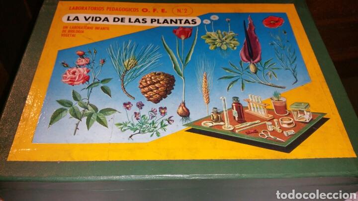 LA VIDA DE LAS PLANTAS NÚMERO 2 (Juguetes - Juegos - Educativos)