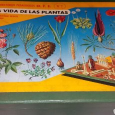 Juegos educativos: LA VIDA DE LAS PLANTAS NÚMERO 2. Lote 136165949