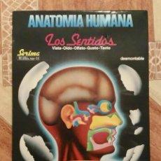Juegos educativos: ANATOMIA HUMANA LOS SENTIDOS DESMONTABLE - SERIMA - AÑOS 80 - NUEVO A ESTRENAR PRECINTADO. Lote 147621668