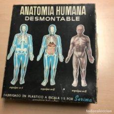 Juegos educativos: JUGUETE ANATOMÍA HUMANA DESMONTABLE COMPLETO SÉRIMA Y EN CAJA. Lote 167925288