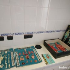 Juegos educativos: JUEGO ANTIGUO ANATOMIA HUMANA DESMONTABLE EN CAJA. Lote 176546382