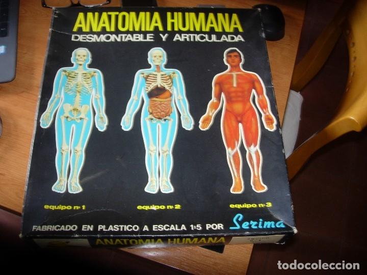 ANATOMIA HUMANA DE SERIMA, EQUIPO N 1 ESQUELETO, AÑO 1963. COMPLETO CON FOLLETO EXPLICATIVO ORIGINAL (Juguetes - Juegos - Educativos)