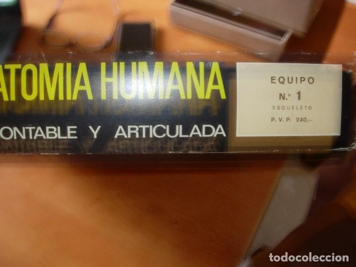 Juegos educativos: ANATOMIA HUMANA DE SERIMA, EQUIPO N 1 ESQUELETO, AÑO 1963. COMPLETO CON FOLLETO EXPLICATIVO ORIGINAL - Foto 4 - 176924854