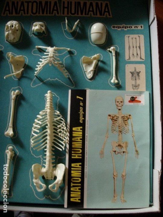Juegos educativos: ANATOMIA HUMANA DE SERIMA, EQUIPO N 1 ESQUELETO, AÑO 1963. COMPLETO CON FOLLETO EXPLICATIVO ORIGINAL - Foto 7 - 176924854