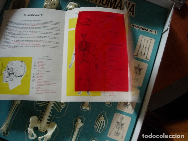 Juegos educativos: ANATOMIA HUMANA DE SERIMA, EQUIPO N 1 ESQUELETO, AÑO 1963. COMPLETO CON FOLLETO EXPLICATIVO ORIGINAL - Foto 9 - 176924854