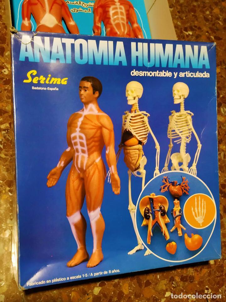 ANATOMIA HUMANA DE SERIMA (Juguetes - Juegos - Educativos)