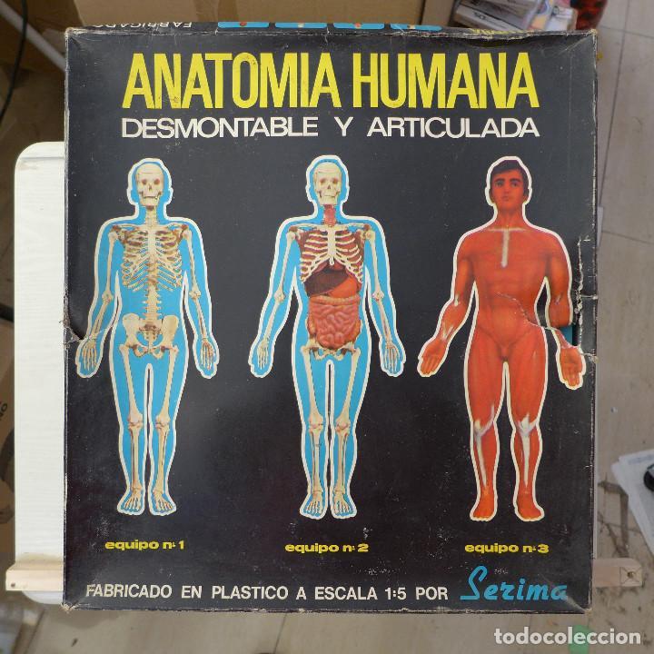 ANATOMIA HUMANA DESMONTABLE Y ARTICULADA EQUIPO Nº 4 DE SERIMA NUEVO SIN USAR (Juguetes - Juegos - Educativos)