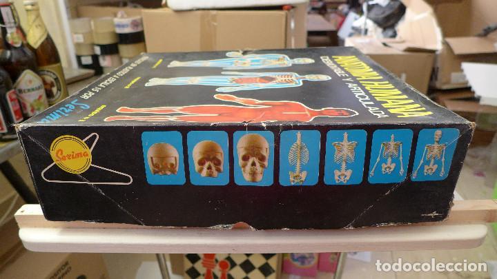 Juegos educativos: ANATOMIA HUMANA DESMONTABLE Y ARTICULADA EQUIPO Nº 4 DE SERIMA NUEVO SIN USAR - Foto 4 - 196662476